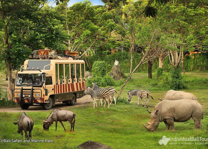Bali Safari Marine Park Gianyar with Animal Zoo, Journey ...